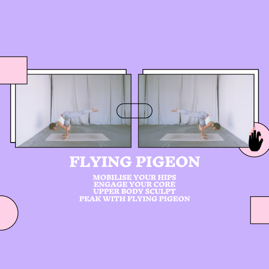 Flying Pigeon Flow